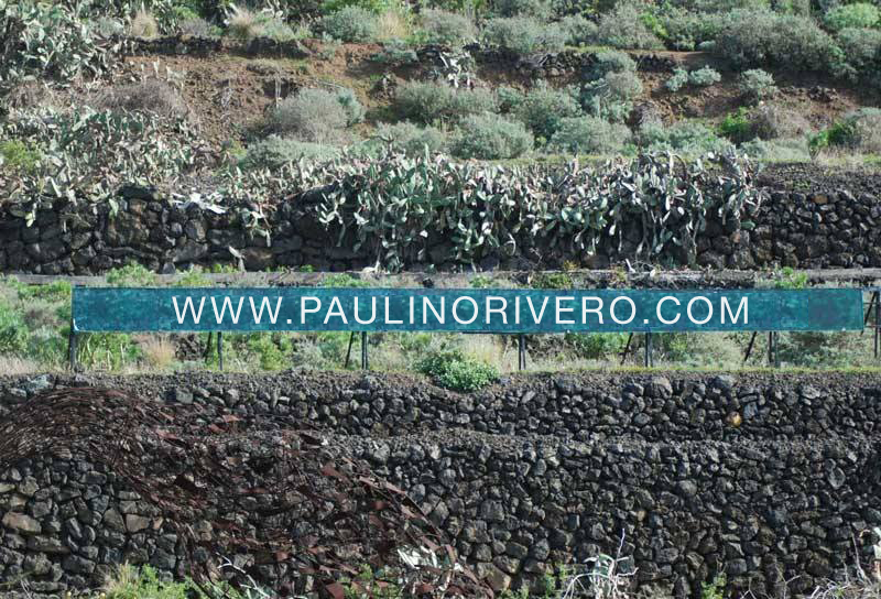 www.paulinorivero.com