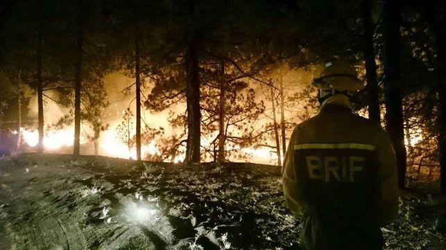 pino-canario-incendio-La_Palma_EDIIMA20160808_0239_18