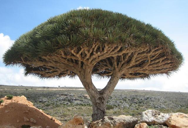 Foto: Historiacastilloromeral.blogspot.com